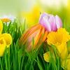 Le printemps : La saison pour prendre de bonnes résolutions !