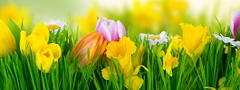 Le printemps : La saison pour prendre de bonnes r�solutions !