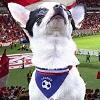 Euro 2016 : Votre chien habillé aux couleurs de votre équipe grâce à Atoodog